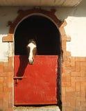 лошадь в конюшне Стоковые Фотографии RF