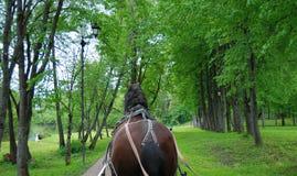 лошадь в проводке Стоковые Изображения RF