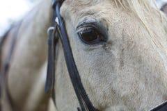 лошадь глаза черноты близкая вверх по белизне стоковая фотография