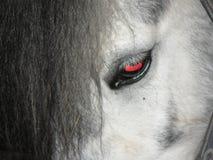 лошадь глаза элемента конструкции Стоковая Фотография