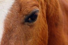 лошадь глаза элемента конструкции Стоковые Фото