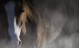 лошадь глаза элемента конструкции Стоковое Изображение RF