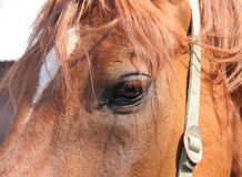 лошадь глаза элемента конструкции Стоковое Фото