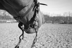 лошадь западная стоковая фотография
