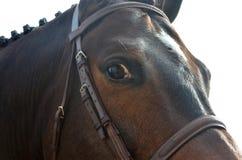 лошадь залива близкая вверх Стоковое Фото