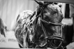 лошадь карлика стоковое изображение rf