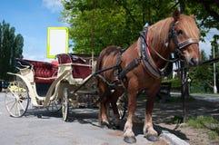 лошадь нарисованная экипажом стоковое фото