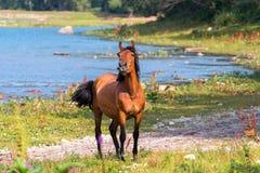 лошадь около реки Стоковое Изображение RF