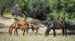 лошадь одичалая Стоковое фото RF