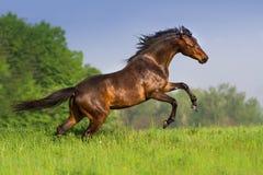 лошадь поднимая вверх стоковые фотографии rf