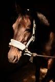 лошадь проводки головная Стоковое Изображение