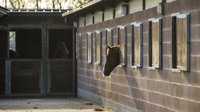 лошадь сонная Стоковые Фото