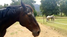 лошадь сонная Стоковая Фотография
