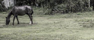 лошадь старая Стоковые Изображения