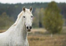 лошадь стоя в поле на сухой траве в осени стоковое изображение