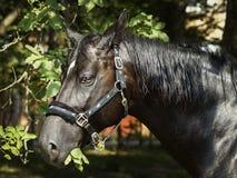 лошадь с волнистым зеленым цветом еды гривы выходит от дерева Стоковая Фотография