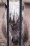 лошадь унылая Стоковое Фото