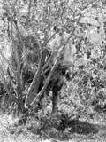 лошадь Peeka-шиканья стоковые фото