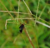 Ошибки любов на черенок травы стоковое фото