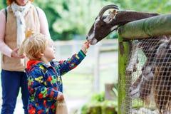 Оягнитесь козы мальчика подавая на скотном дворе Стоковое фото RF