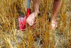 Оягнитесь ноги над лопаткоулавливателем Стоковые Изображения RF