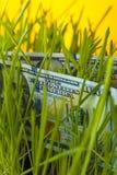 100 долларовых банкнот и зеленой трава Стоковое Изображение