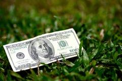 100 долларовых банкнот на зеленой траве Стоковые Фотографии RF