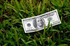 100 долларовых банкнот на зеленой траве Стоковые Изображения