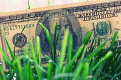 100 долларовых банкнот растя в зеленой траве, финансовая концепция роста Стоковая Фотография RF