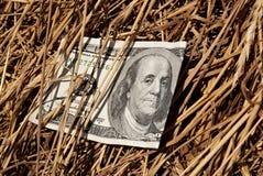 100 долларов в сене Стоковые Фотографии RF
