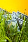 100 долларов счетов в зеленой лужайке Стоковое фото RF