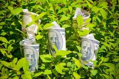 доллары расти Селективный фокус Стоковое Изображение