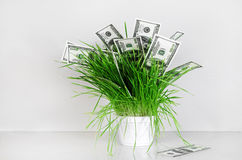 доллары травы Стоковая Фотография