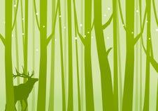Олени в зеленом цвете леса Стоковая Фотография