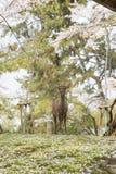 Олени в парке Nara стоковые фото