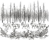 Олени в северном taiga Стоковая Фотография