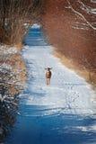 Олени на проселочной дороге Snowy стоковая фотография