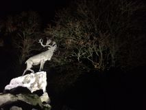Олени на скалах на ноче Стоковое Изображение RF