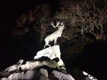 Олени на скалах на ноче Стоковая Фотография