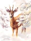 Олени окруженные иллюстрацией снежной зимы акварели ветвей животной вручают покрашенный Стоковое Изображение RF