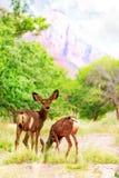 Олени пася на Wildflowers в каньоне Сиона Стоковое фото RF