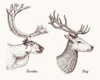 Олени северного оленя и рогача vector иллюстрация нарисованная рукой, выгравированные дикие животные с antlers или год сбора вино бесплатная иллюстрация