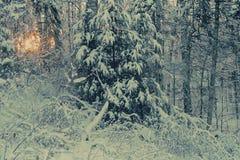 одеяло захода солнца Стоковое фото RF