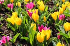 Одеяло красочных цветков Стоковые Фото