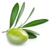 Оливка с листьями на белой предпосылке Стоковое Фото