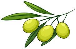 оливка иллюстрация вектора