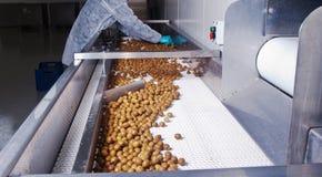 Оливки в обрабатывая машине Стоковое Фото
