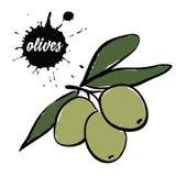 Оливки ягод зеленые бесплатная иллюстрация