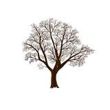 Оливковое дерево без листьев иллюстрация вектора