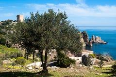 Оливковое дерево и стога Scopello стоковое фото